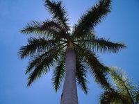 palm-tree-1391573